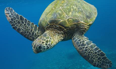 turtle-001